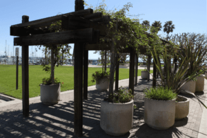 Plaza at Cabrillo Marina Offers Setting for Wedding